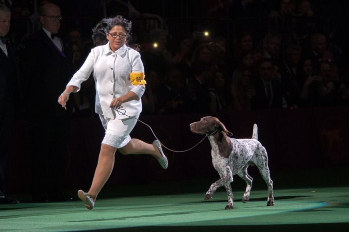 westminster_dog_show